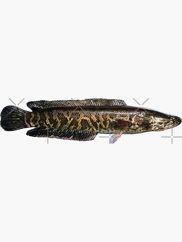 Northern Snakehead Sticker By Lureguru Redbubble Northern Stickers Fishing Trip