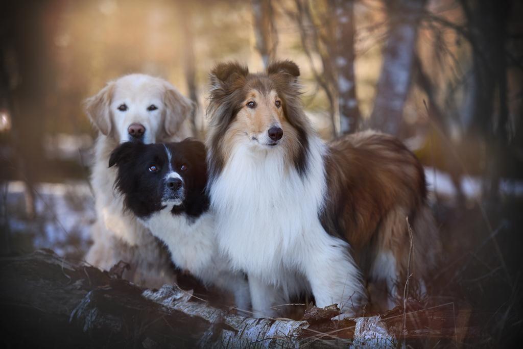 Hundefotografie Osterreich Anne Geier Fotografie Portfolio Dogs Dog Portraits Dog Photography