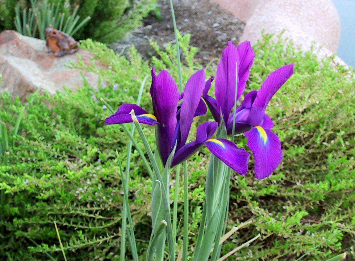 winter gardening tips home u0026 garden pinterest gardens