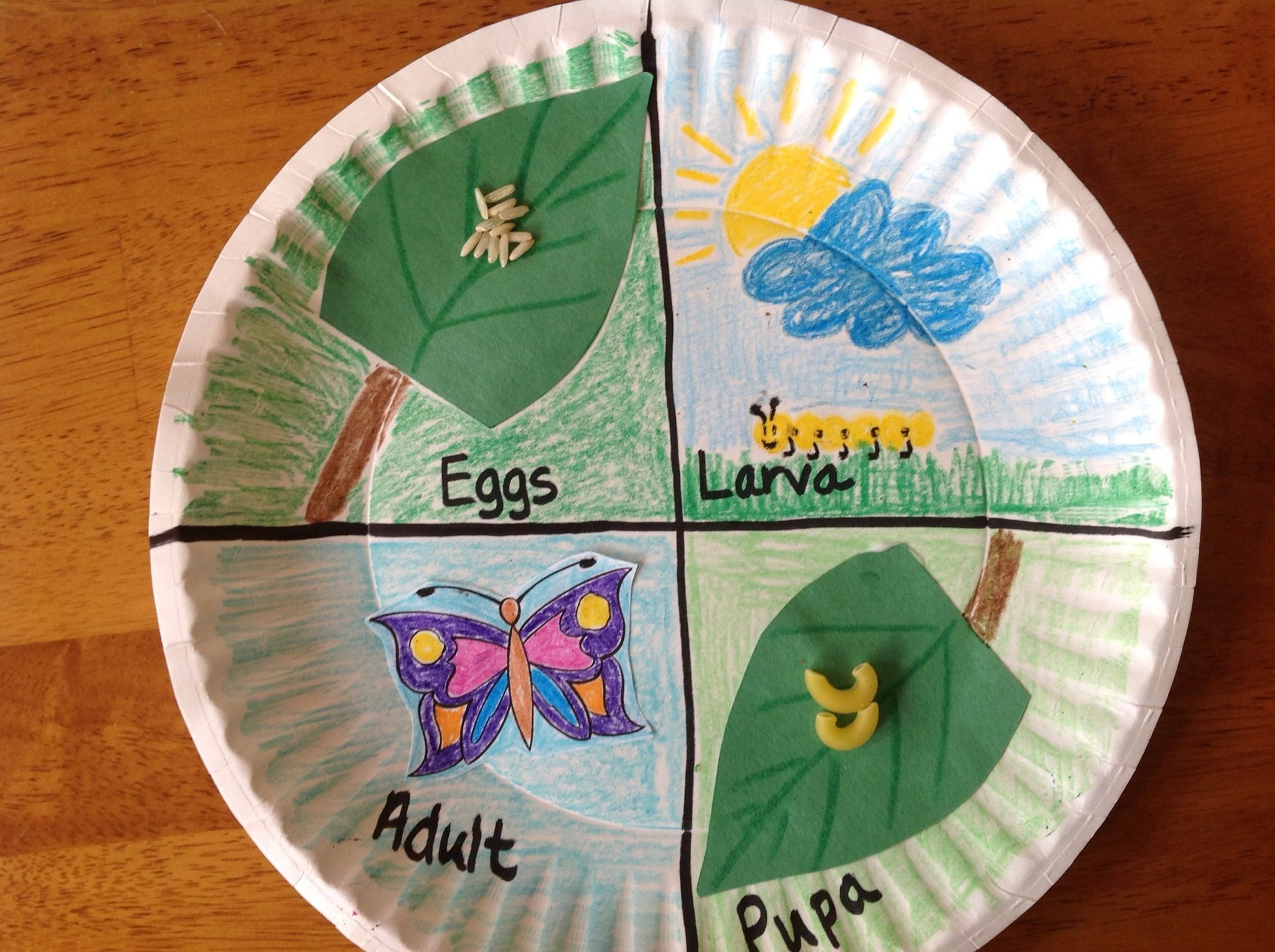 How To Make A Model Of A Butterfly Life Cycle