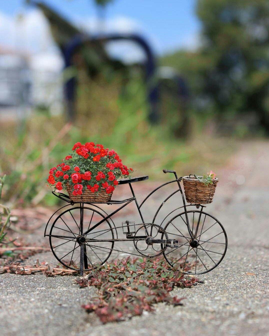 Pin By Seyma Emiroglu On Bloom Miniature Photography Miniature
