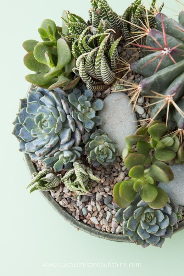 How To Water Succulent Plants With Images How To Water Succulents Planting Succulents Succulents