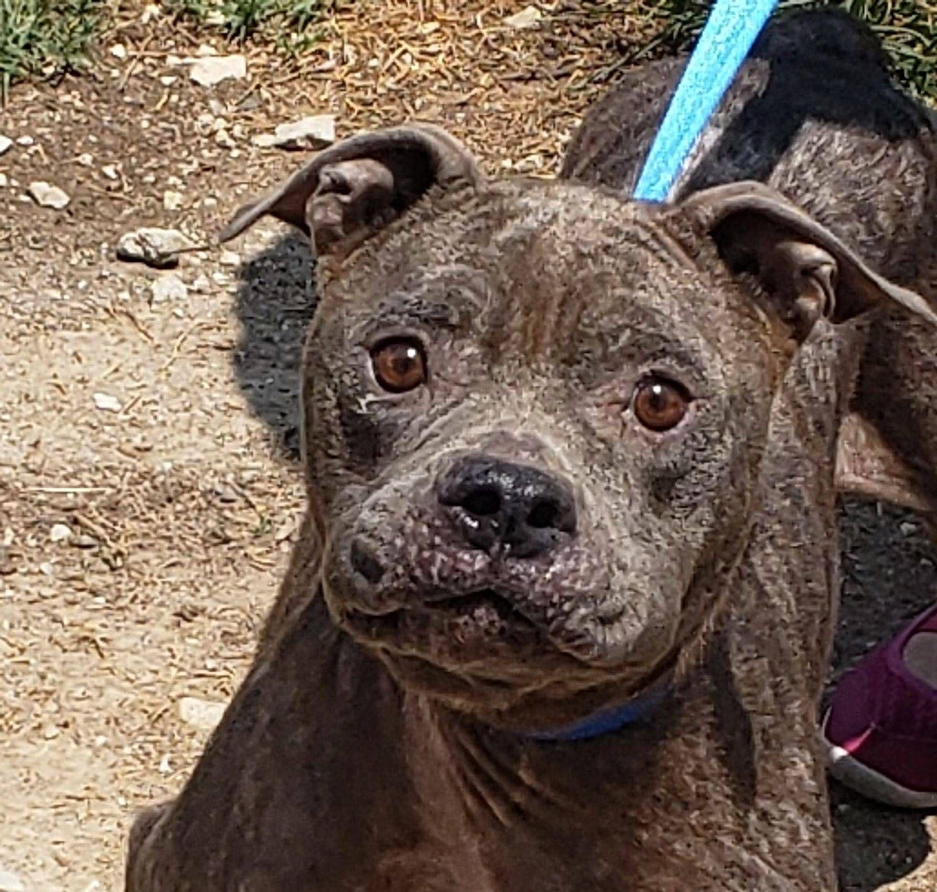 Barking Mad Animal Rescue Non Profit No Kill Shelter Dog Adoption Animal Rescue Cute Puppies
