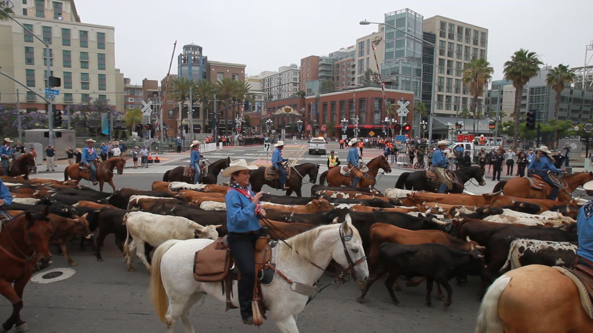 200 cows take over downtown San Diego streets in historic cattle drive - The San Diego Union-Tribune