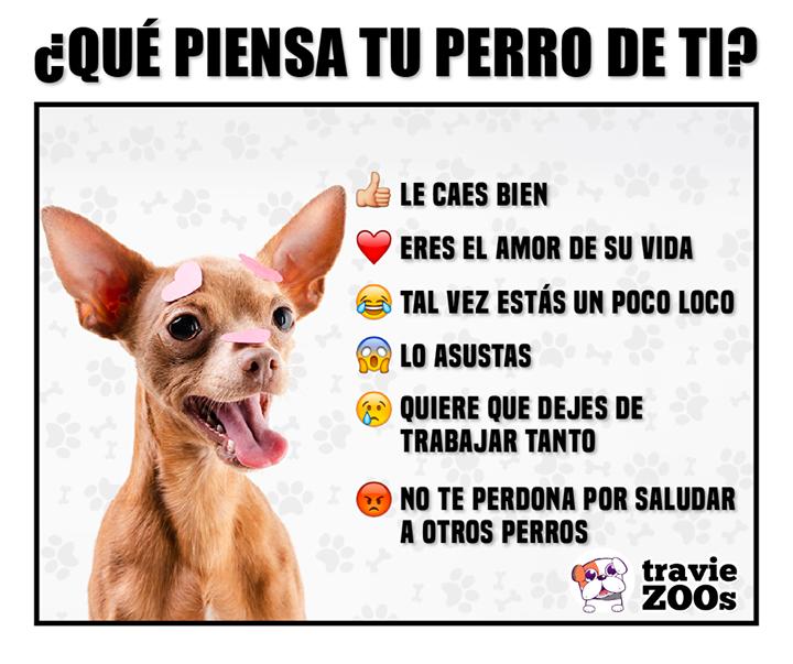 No Hay Perro Que No Piense Esto Perros Amor Perruno Fotos De Animales