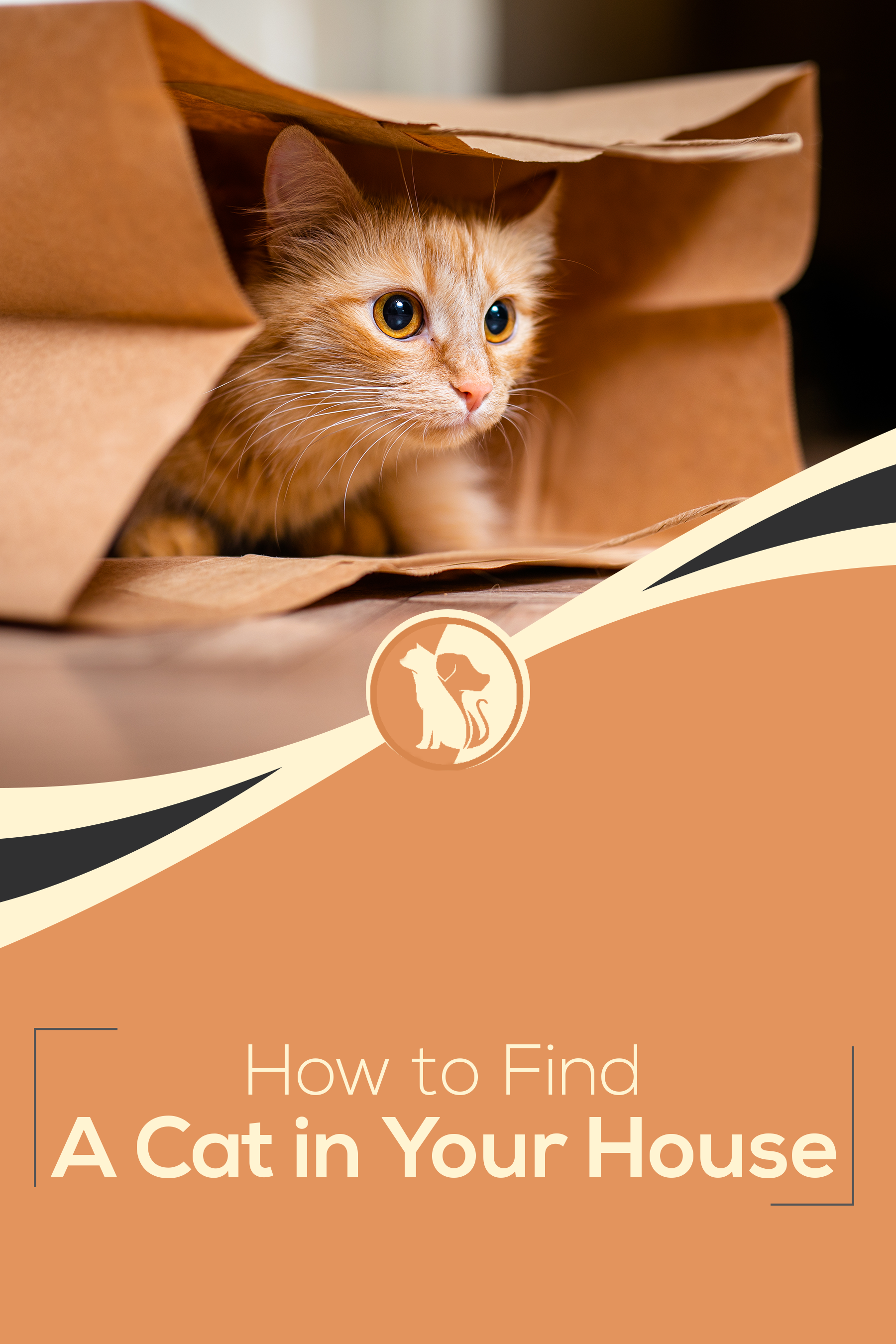 How To Find A Cat In Your House In 2020 Cats Find Pets Pets