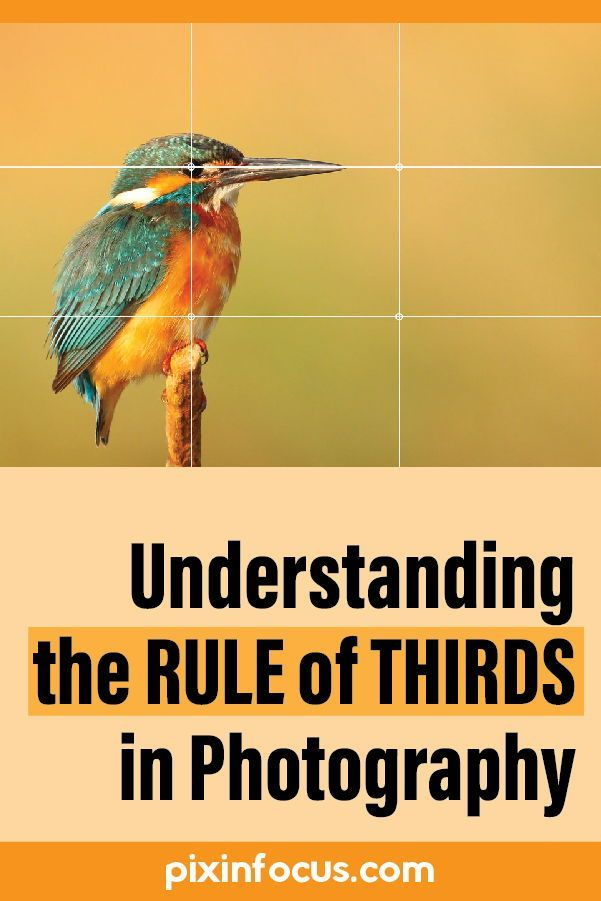 The rule of thirds is a fundamental rule of photography composition. Understanding the rule of thirds will help you take your images to a new level.    #photographycomposition #ruleofthirds #ruleofthirdsphotography #ruleofthirdsexamples