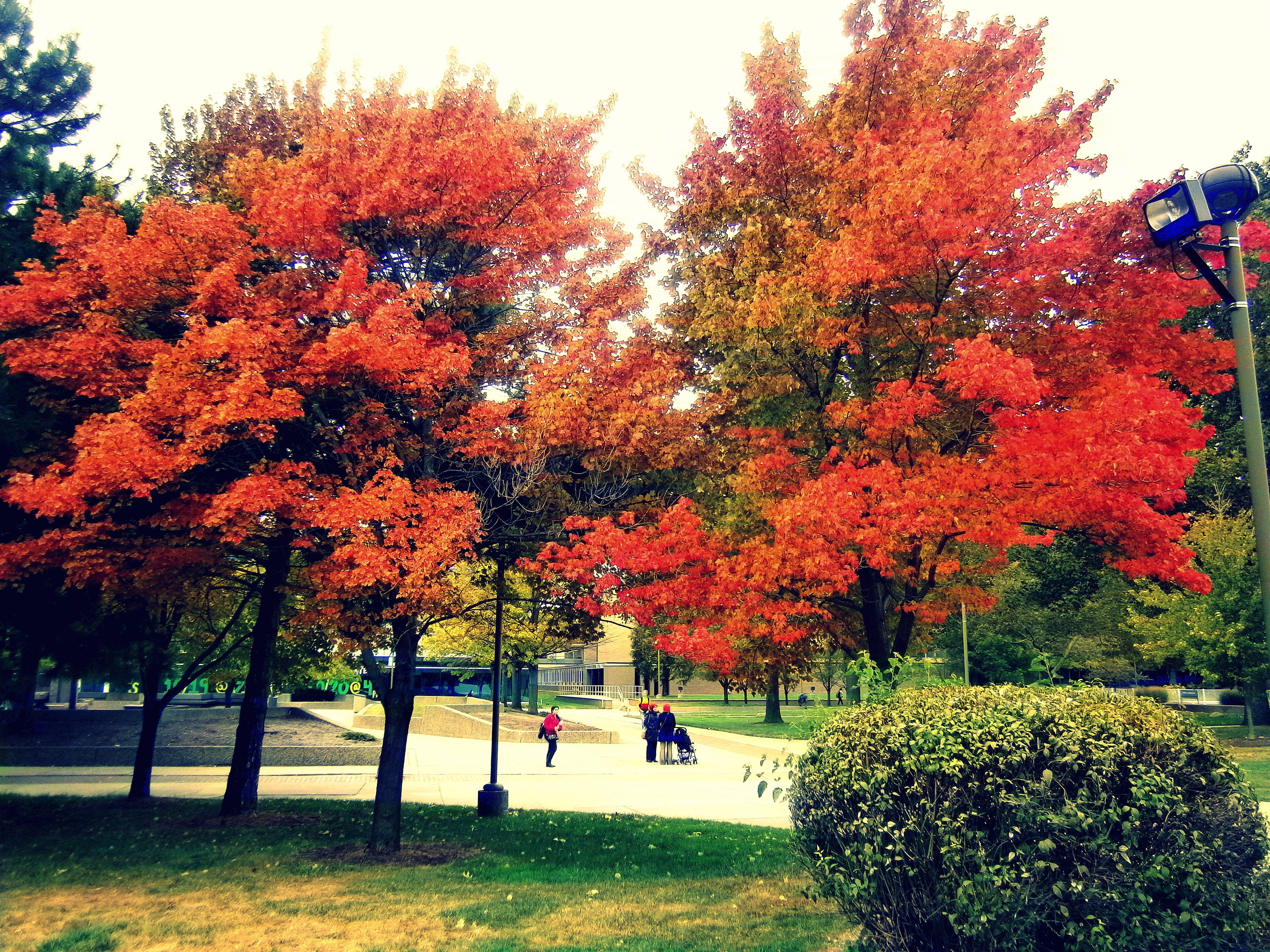 Fall In Detroit Is Beautiful Wayne State University Campus University Campus Wayne State University Wayne State