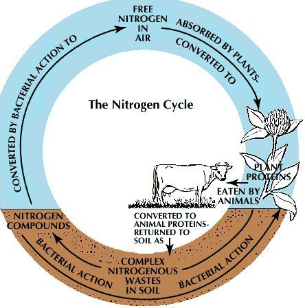 The Nitrogen Cycle is close to the carbon cycle but slightly