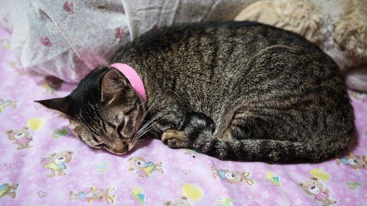 Denver passes bill banning cat declawing animal abuse