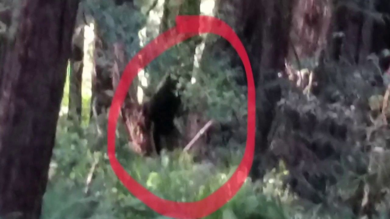 Dogmen High Sense Of Smeel Why Dont See Them They Smell People And Leave Its Like A Wolf Out In Open By Yourself I Northern California Michigan Dogman Photo