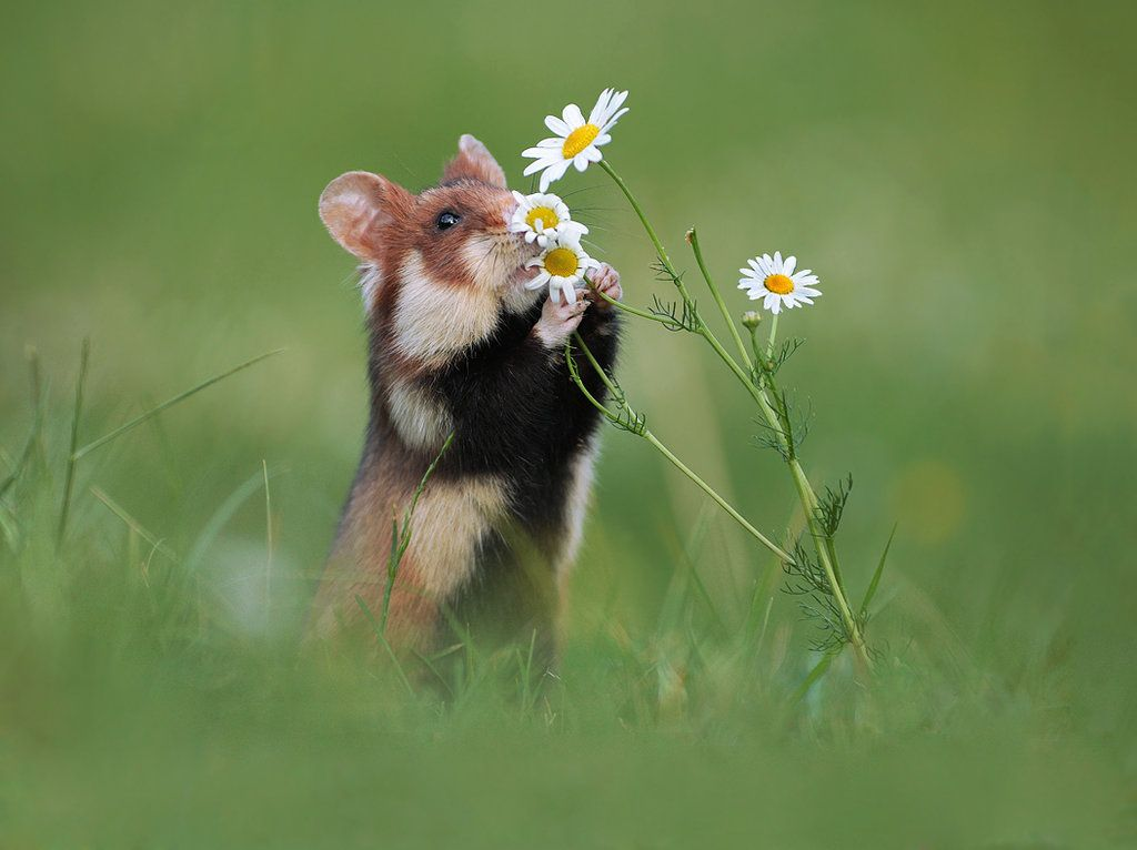 Take Time to Smell the Flowers by JulianRad | critters