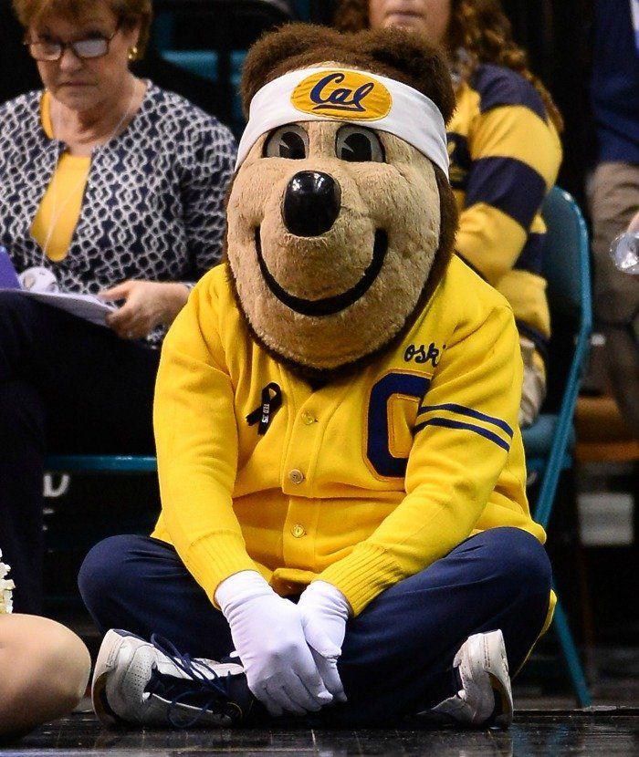 Mascot Monday The Cal Golden Bears Http Www Survivingcollege Com Mascot Monday Uc Berkeley Cal Golde Cal Golden Bears Golden Bears California Golden Bears