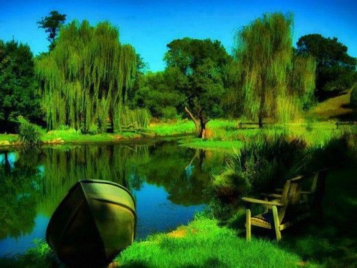 The Most Beautiful Nature Images We Collect Best Natural Scene Pictures For Our Rea Beautiful Images Nature Beautiful Nature Wallpaper Green Nature Wallpaper