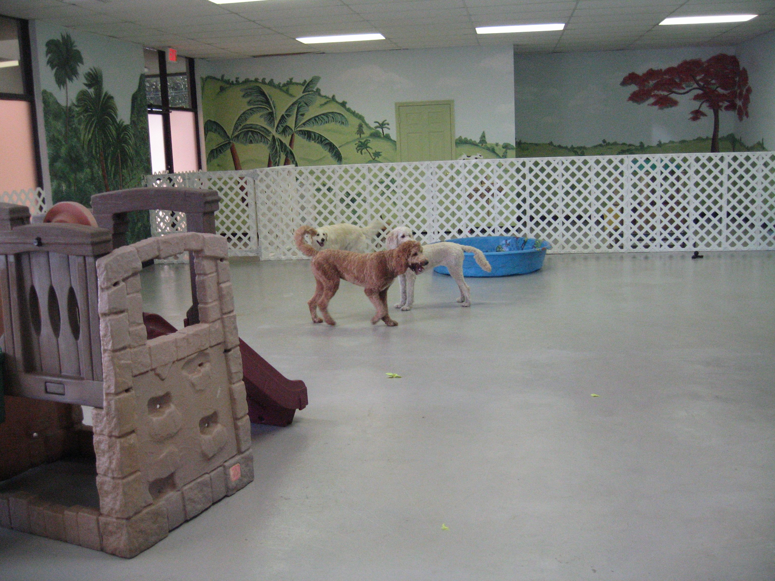 83 best dog daycare images on pinterest daycare ideas dog