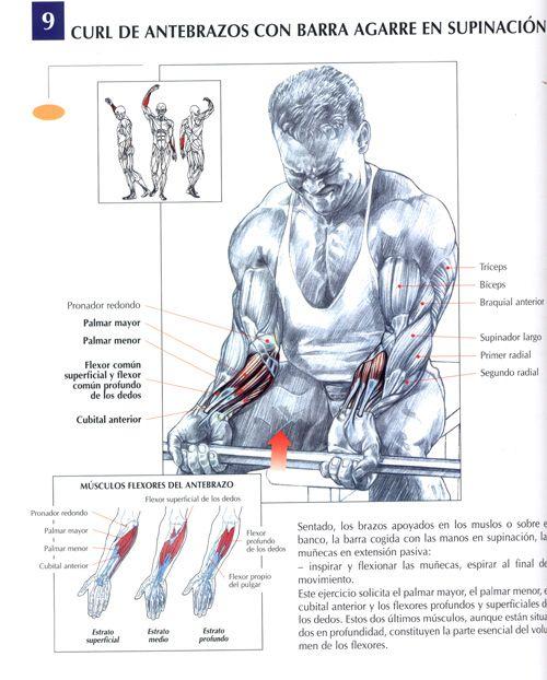 ejercicios de antebrazo para el gym