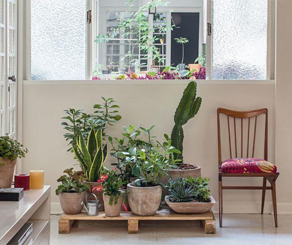 Decorar con cactus f cil y econ mico cactus econ micas for Decorar jardin economico