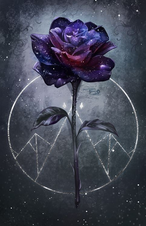 Large Night Rose