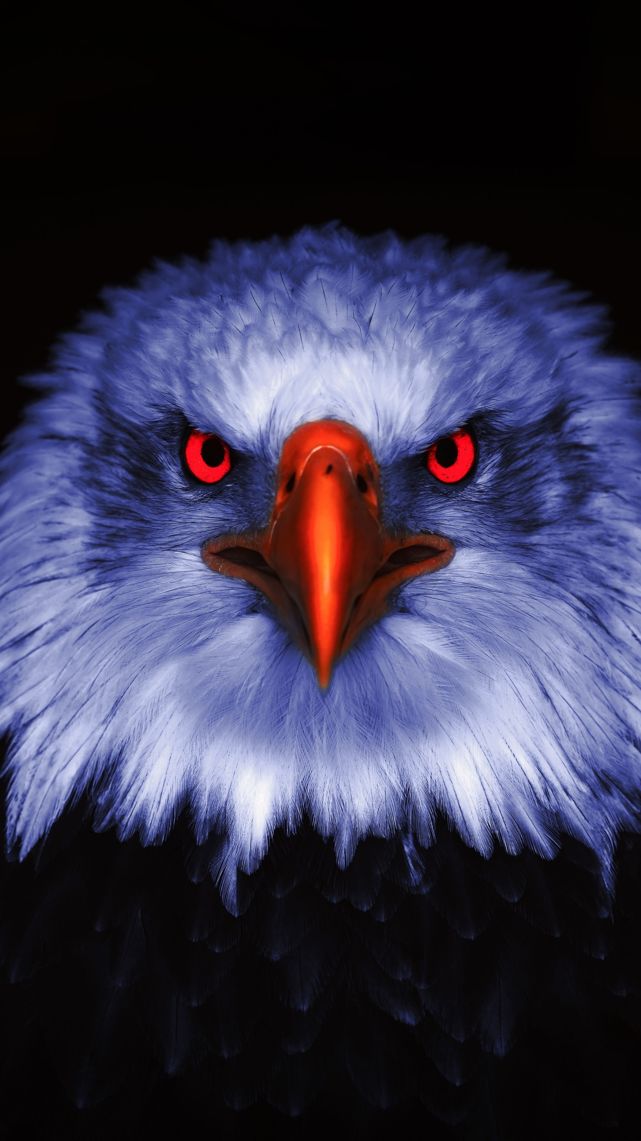2160x3840 Eagle Raptor Red Eyes Close Up Wallpaper In 2020 Eagle Wallpaper Animals Black And White Eagle Artwork