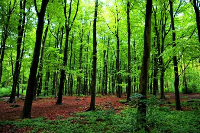 Nový výskum priniesol neuveriteľné závery. Stromy medzi sebou dokážu komunikovať a dokonca rozpoznajú aj svoje potomstvo
