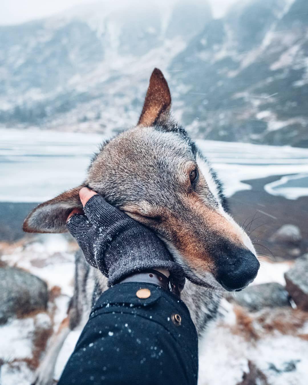Pin On Animal Animales