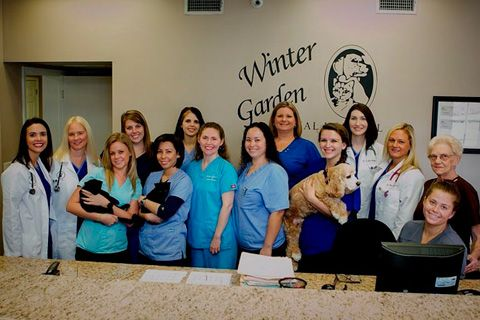 High Quality Winter Garden Animal Hospital Is A Full Service Veterinary Medical Facility  Located In Winter Garden, FL. Pictures