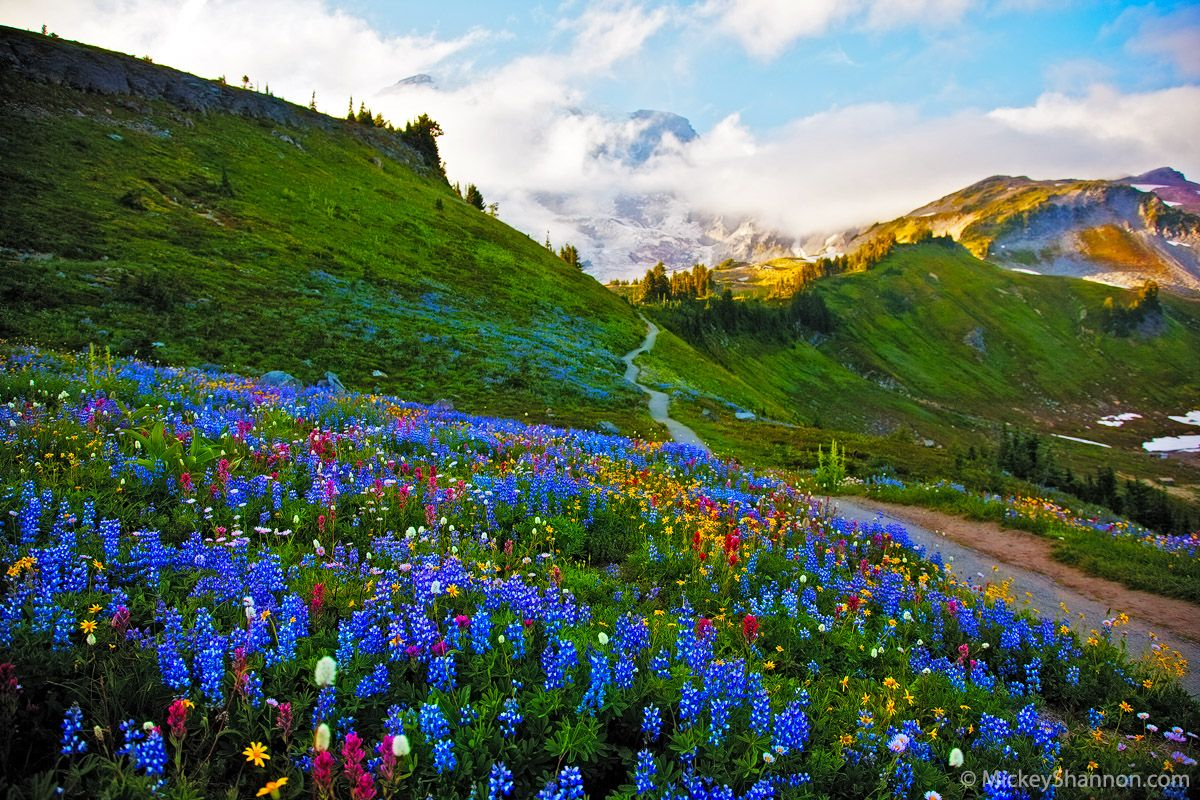 mount rainier single guys Beneath rainier's volatile exterior, even darker forces fester  get to the heart of  mt rainier national park area with one of lonely planet's in-depth,.