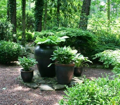 Hosta in containers container gardens pinterest for Fine gardens landscaping