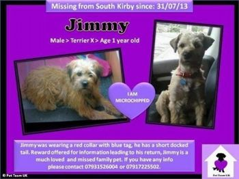 Jimmy Is Still Missing Last Seen In West Yorkshire But Could Be Anywhere Now Jimmy Is Still Missing His Owners Are Devasta Dogs 1 Year Olds Missing Him