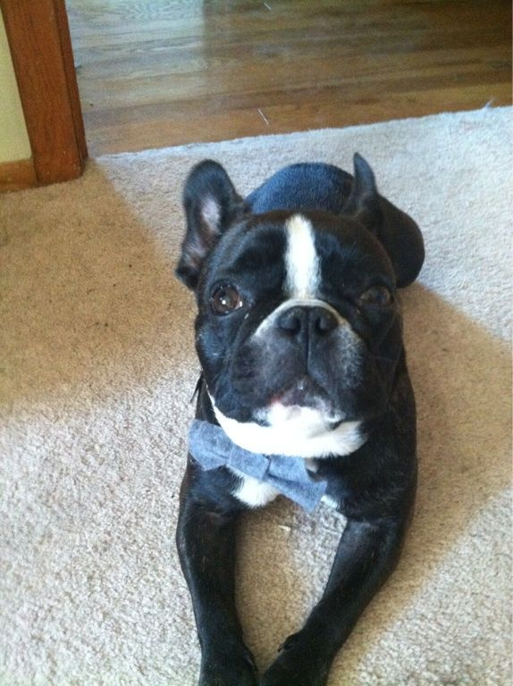 Rudi Loves Wearing A Bow Tie Everyday Pets Cute Animals