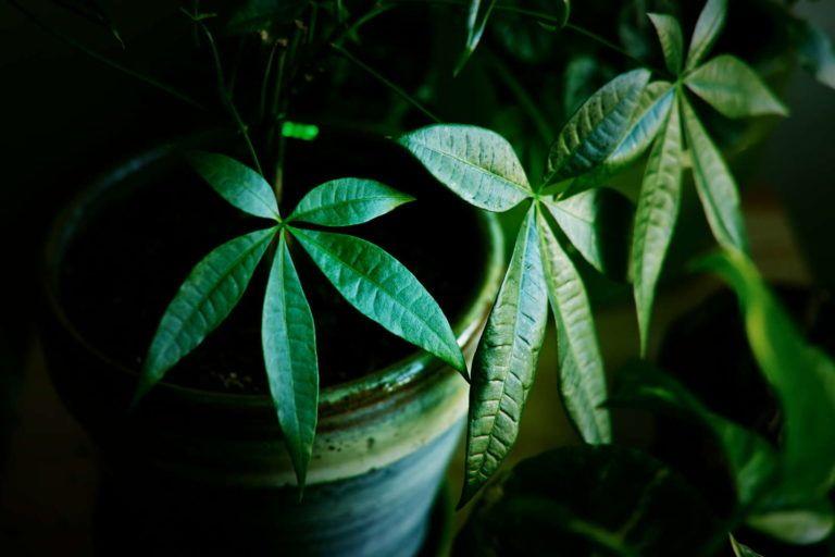 Büropflanzen: 10 pflegeleichte Arten fürs Büro - Plantura #pflegeleichtepflanzen