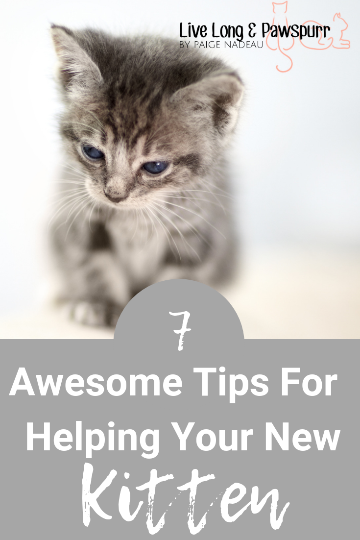 7 Helpful Tips For Introducing A New Kitten To Your Home Live Long And Pawspurr Kitten Adoption Kitten Cat Advice