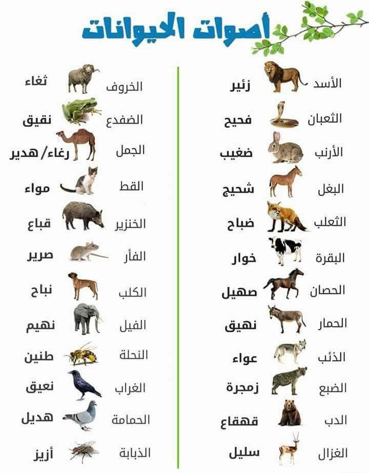 Pin by fatsh abdala on Arabic | Learning arabic, Learn