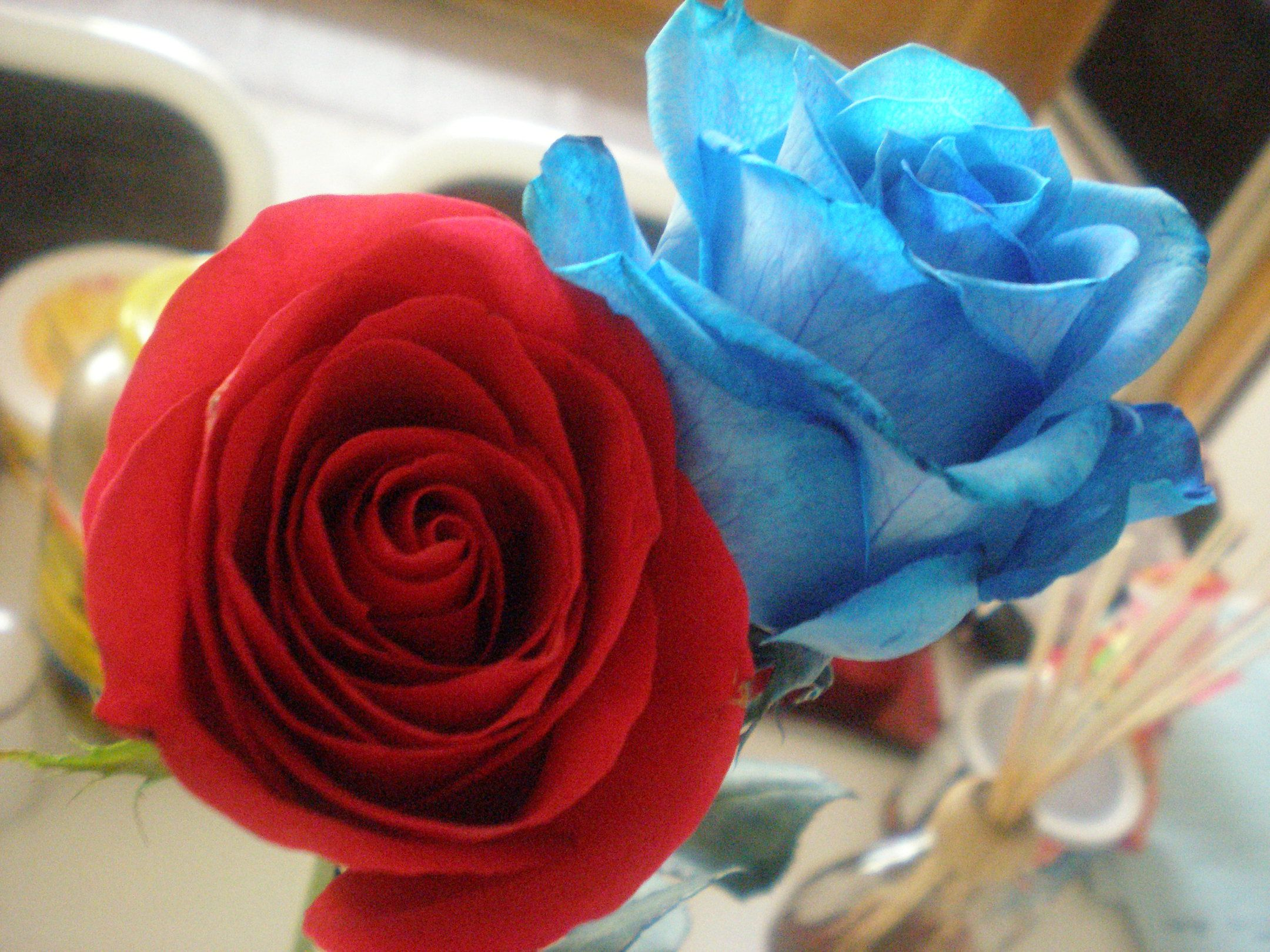 Red And Blue Roses Blue Roses Red Pictures Rose
