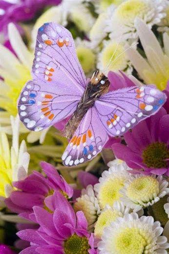 Pájaros Hermosos Mariposas Y Flores Bellas Mariposas Pinterest