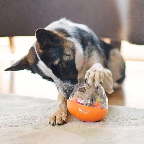 Treat dispensing doggie brain toy. 41 Insanely Clever Products Your Dog Deserves To Own
