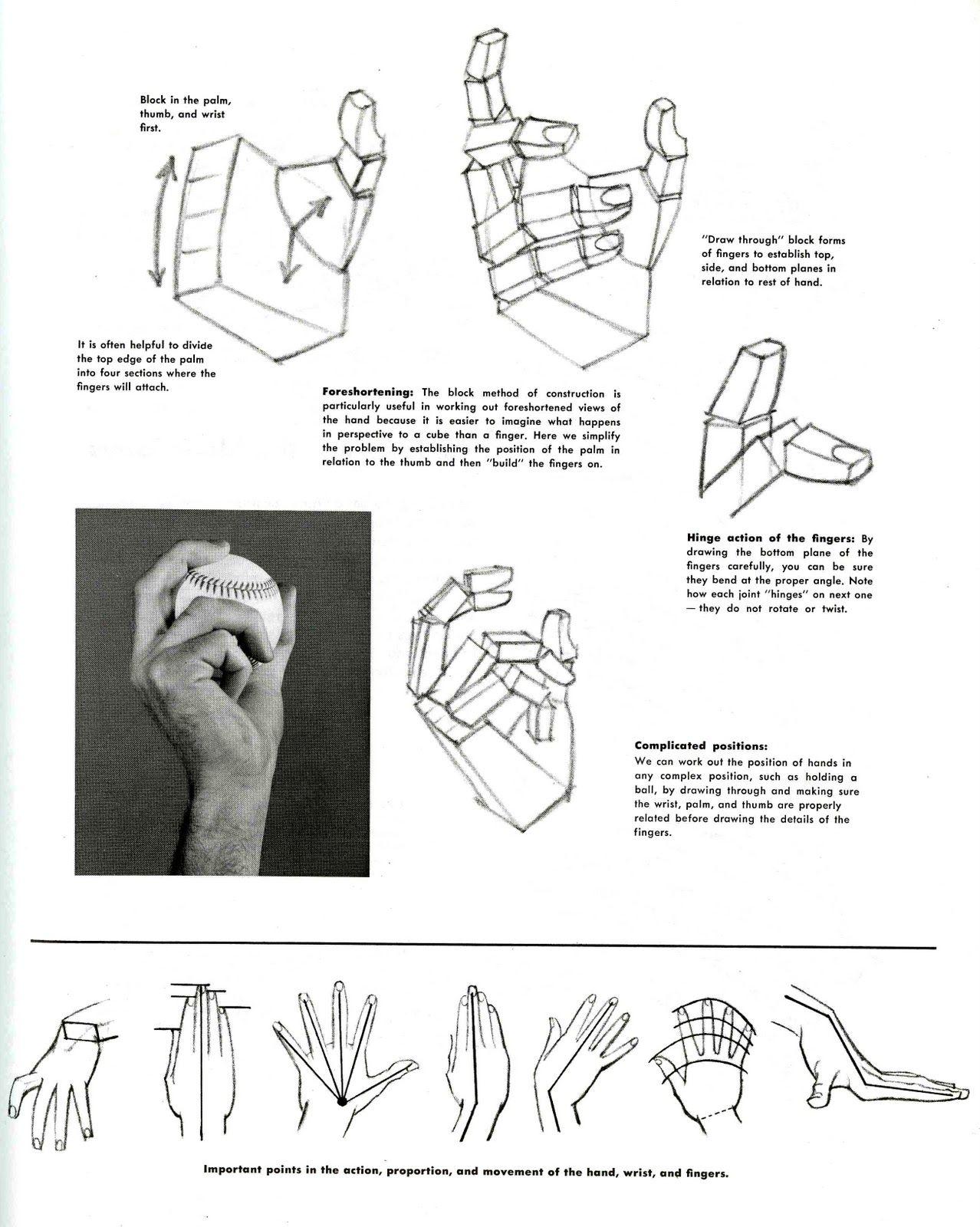 Hands+4.jpg (1278×1600) | Anatomy - Hand | Pinterest | Character ...