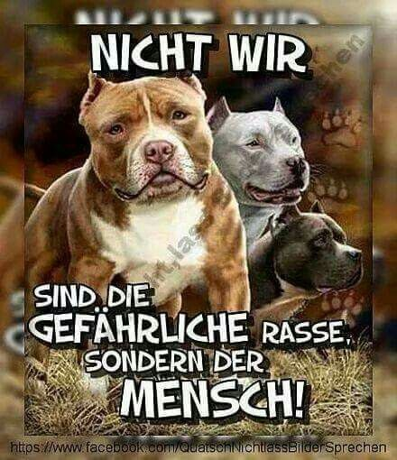 Pin Von Bianca Kaspers Auf Around Of Dogs In 2020 Pitbull Terrier Ausgestopftes Tier Ich Liebe Hunde