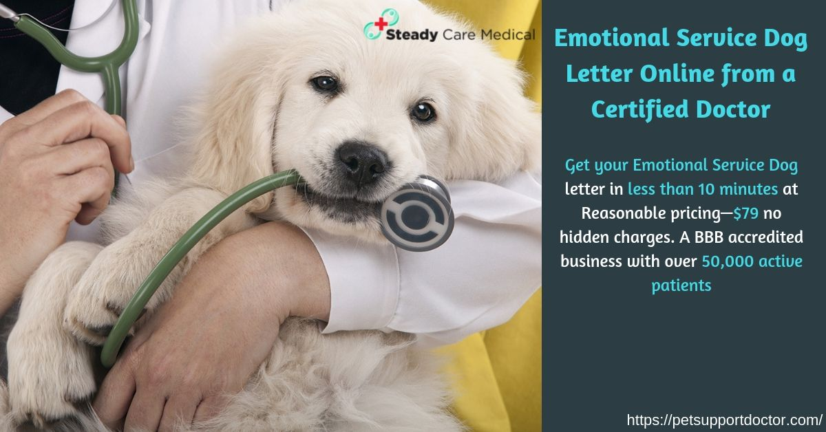 Get Your Emotional Service Dog Letter In Less Than 10 Minutes At