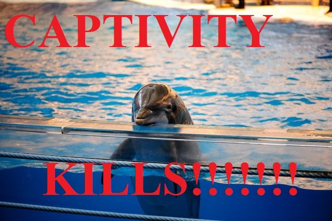 GET EVOLVED HAWAII! Say No to Oahu's Proposed Swim-With-Dolphins Encounter - NO MORE CAPTIVITY!  Robbing these gentle sentient beings of their families and their freedom is an ABOMINATION, NOT ENTERTAINMENT!  Please Sign and Share Widely In PROTEST!