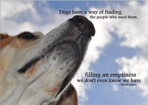 Dog Death Quotes 20 Best Inspirational Dog Death Quotes Pinterest Images  Mascotas .