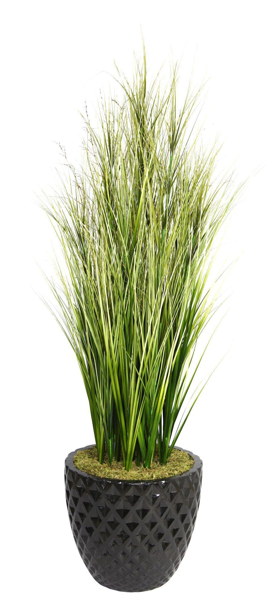 Tall Onion Grass in Round Tapered Fiberstone Pot