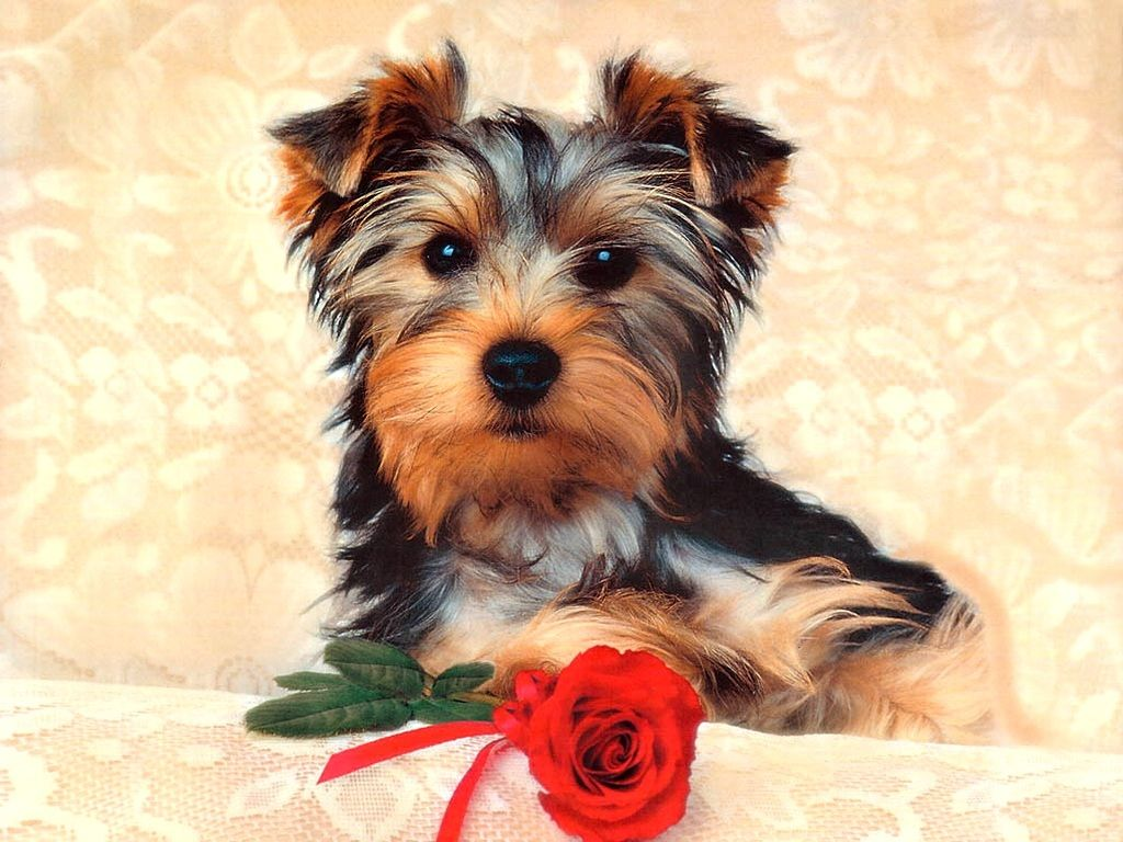 Youwall sleeping dogs wallpaper wallpaperwallpapersfree hd