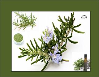 وصفات منزلية لجمالك Homemade Beauty Recipes إكليل الجبل Plants Blog Blog Posts