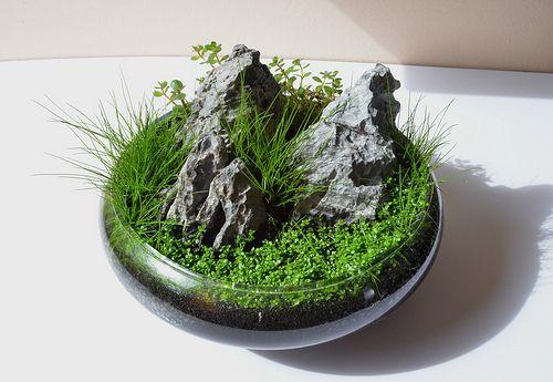 Wabi Kusa 1 Plantas, Mini jardines y Jardines