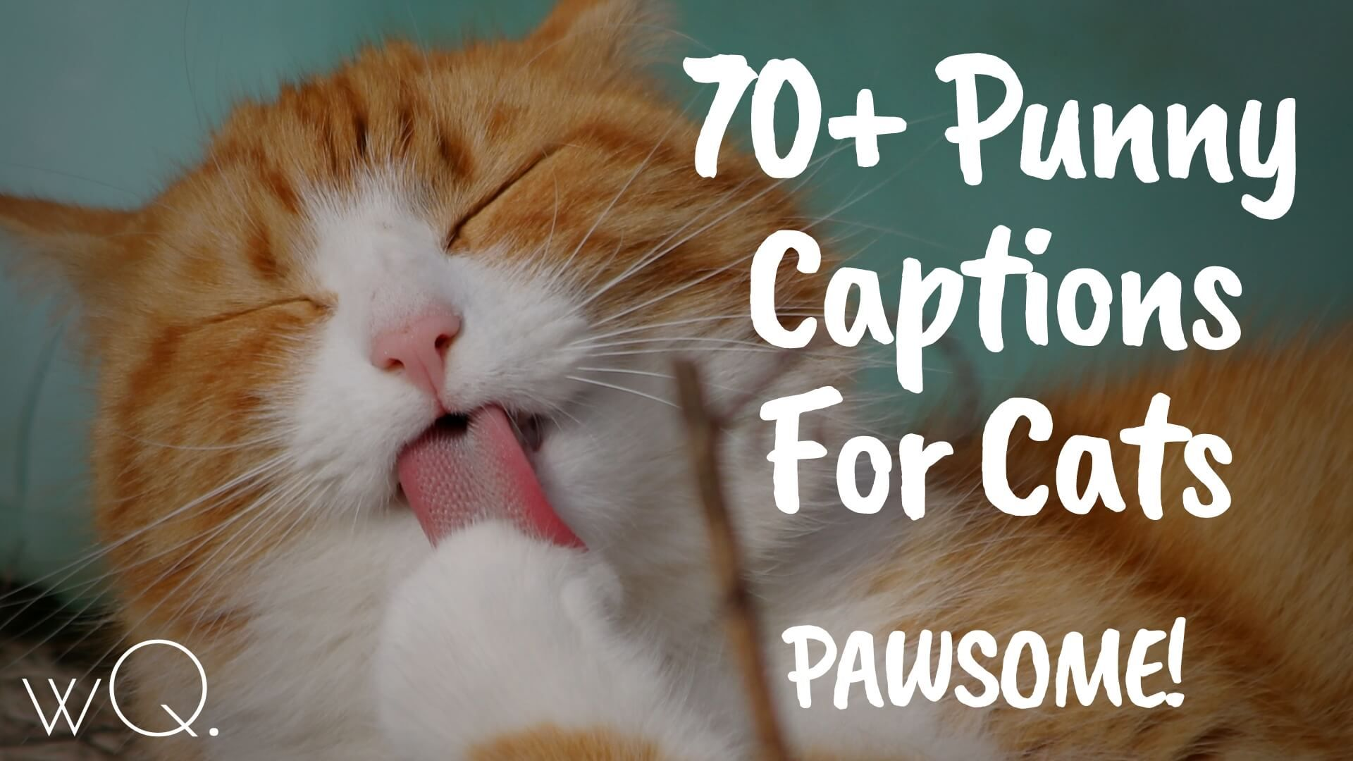 70 Punny Captions For Cats Pawsome Instagram Pictures Wittyquest Funny Cat Captions Funny Instagram Captions Cat Captions