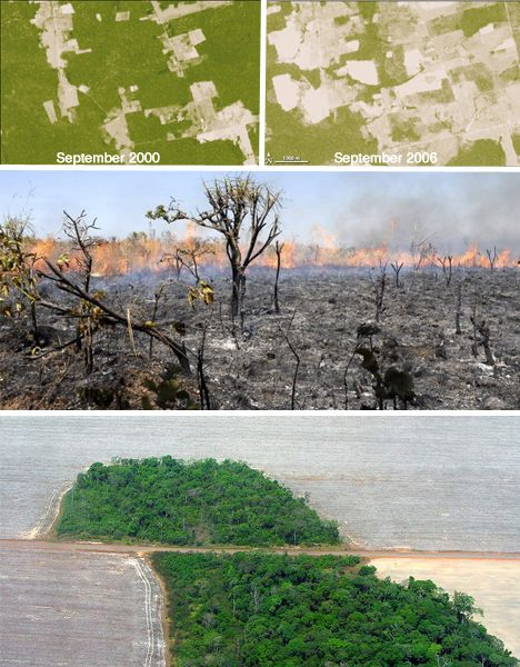 Proof In The Pics Devastating Images Of Eco Disasters