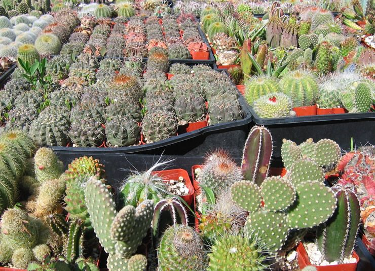 California Nursery Specialties Cactus Ranch Cacti And Succulents