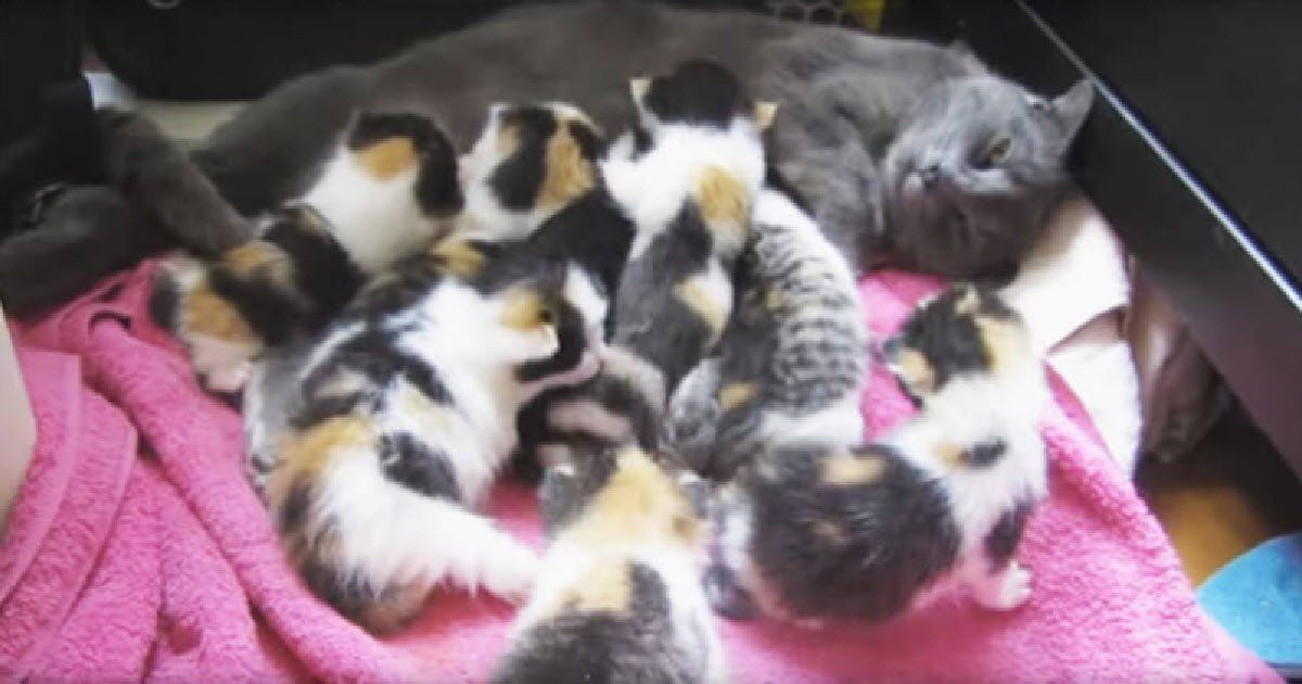 Mama Cat Had A Litter Of The Most Unique Looking Kittens Cute