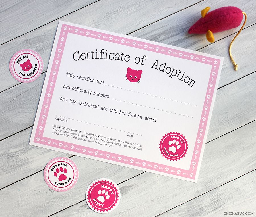 cat adoption certificate  Free printable cat adoption kit | Cat party, Favors and Cat